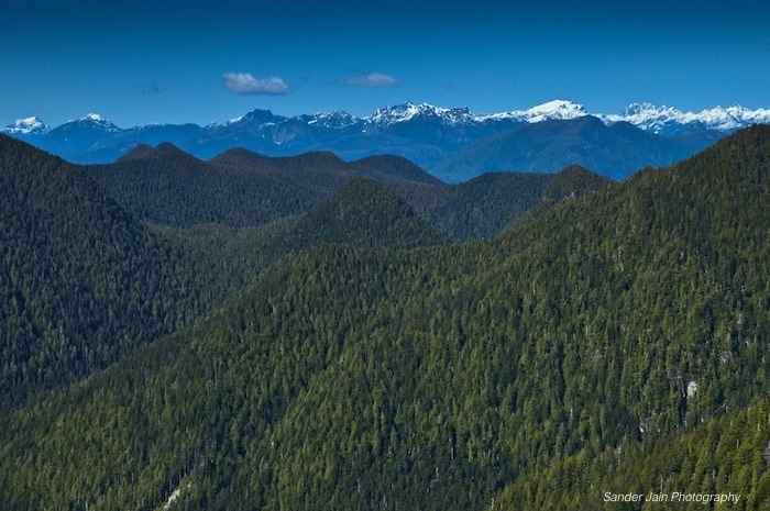 aerial of Clayoquot Sound temperate rainforest